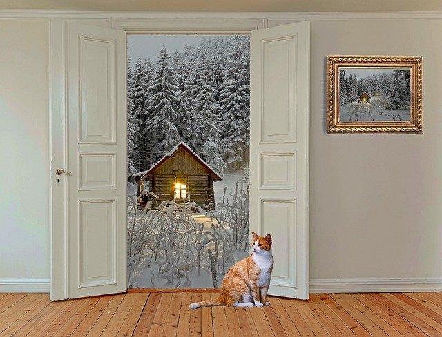 kočka ve dveřích