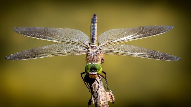 vážka na větvičce